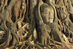 ayutthaya buddha head thailand Arkivfoton
