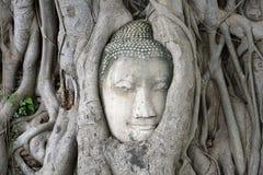 Ayutthaya, cabeza de Buda Fotografía de archivo