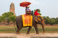 AYUTTHAYA - DECEMBER 14, 2014:Elephant is walking at a scenic ro Stock Photos
