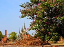 Ayutthaya fördärvar royaltyfri fotografi