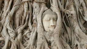 Ayutthaya head Buddha roots tree 4k