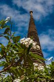 Blooming magnolia in Ayutthaya Historical Park, Thailand