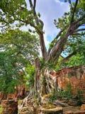 Ayutthaya som är forntida fördärvar, gammal huvudstad, Bangkok, Thailand royaltyfria foton