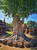 Ayutthaya som är forntida fördärvar, gammal huvudstad för det forntida trädet, Bangkok, Tha arkivfoto