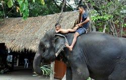 Ayutthaya, Tailandia: Elefante del montar a caballo del padre y del hijo Foto de archivo libre de regalías