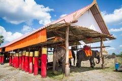 Ayutthaya Tajlandia, Październik, -, 21, 2016: Sąd słonie Obraz Royalty Free