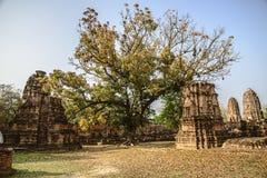 Ayutthaya temple Royalty Free Stock Photos