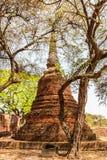 Ayutthaya temple Stock Images