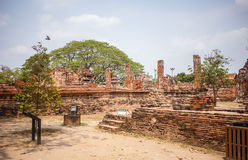Ayutthaya temple ruins, Wat Maha That Ayutthaya as a world heritage site, Thailand. Stock Photography