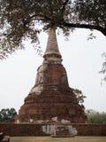 Ayutthaya temple ruins, Wat Maha That Ayutthaya as a world heritage site, Thailand. Stock Images
