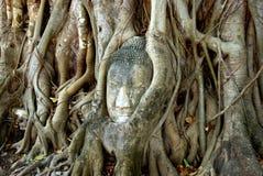 Ayutthaya, Thaïlande : Bouddha dans des fonds d'arbre Image libre de droits