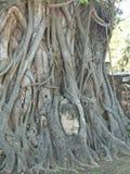 Ayutthaya stockfotos