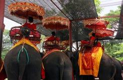 Ayutthaya, Thailand - April 29, 2014 Groep olifanten die voor sightseeingsreizen worden gebruikt royalty-vrije stock fotografie