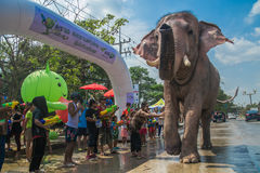 AYUTTHAYA THAILAND - APRIL 14: Rumlare tycker om vatten som plaskar med elefanter under den Songkran festivalen på April 14, 2016 Arkivbilder