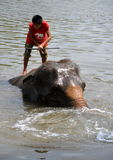 Ayutthaya, Thailand: Boy Riding Elephant Royalty Free Stock Photo