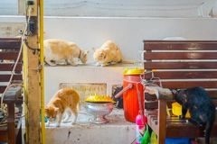 AYUTTHAYA, THAILAND, FEBRUARY, 08, 2018: Indoor view of many beautiful cats inside of building, eating and playing at Royalty Free Stock Image