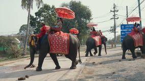 Elephants riding tourists stock video