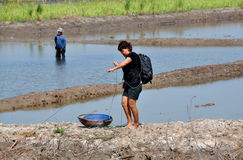 Ayutthaya, Thailand: Woman with Basket Fishing. A woman stands on an earthen berm separating fisheries next to a straw basket as she hauls in a net in the Stock Photos