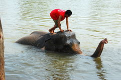 Ayutthaya, Thailand: Young Boy on Elephant Royalty Free Stock Photography