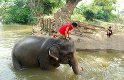 Ayutthaya, Thailand: Young Boy Riding Elephant Stock Photo