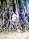 Ayutthaya , The World Heritage. Miracle, Bhuddha , Thailand Stock Images
