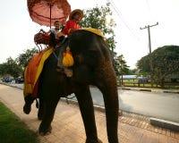 ayutthayaelefantritt thailand Arkivfoton