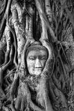 ayyuthaya菩萨顶头泰国 免版税库存图片