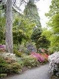 A azálea alinhou o trajeto em jardins de Bodnant, Gales norte Imagens de Stock Royalty Free