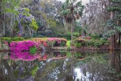Azálea de Lowcountry e jardim do sul da glicínia foto de stock royalty free