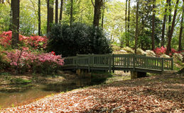 Azáleas em jardins de Callaway imagem de stock royalty free