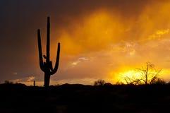 AZ季风风暴 免版税库存照片