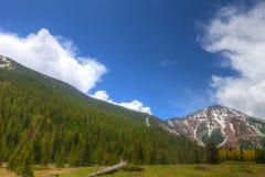 AZ-Coconino全国森林内在盆地足迹 免版税库存照片