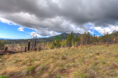AZ-Coconino National Forest. This image was taken while hiking up the forest road which passes the intersection of the Schultz Tank road, then on to the Inner Royalty Free Stock Photo