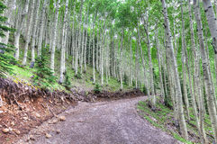 AZ-Coconino National Forest- Near Inner Basin Trail Royalty Free Stock Photography