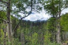 AZ-Coconino National Forest- near Inner Basin Trail Stock Images