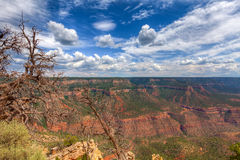 AZ-Grand Canyon-North Rim Royalty Free Stock Photography