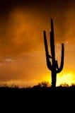 AZ-Monsunsturm stockbild