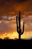 AZ-Monsunsturm stockfotos