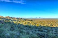 AZ-Picacho Peak-Cholla cactus Stock Photos
