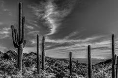 AZ-Waddell-White Tank Mountain Regional Park Royalty Free Stock Photography