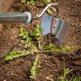 Azada del jardín con la mala hierba en tierra en jardín fotografía de archivo libre de regalías