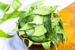 Azadirachta indica, Neem avec ses feuilles dans une cuvette d'argile pour des soins de la peau Image stock