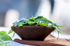 Azadirachta indica, Neem avec ses feuilles dans une cuvette d'argile pour des soins de la peau Photos stock