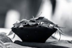Azadirachta indica, Neem avec ses feuilles dans une cuvette d'argile pour des soins de la peau Photographie stock