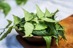 Azadirachta indica, Neem avec ses feuilles dans une cuvette d'argile pour des soins de la peau Photo stock
