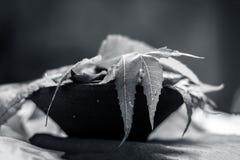 Azadirachta indica, Neem avec ses feuilles dans une cuvette d'argile pour des soins de la peau Photo libre de droits