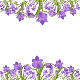 Azafranes púrpuras en el vector de la nieve Fotografía de archivo libre de regalías