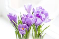 azafranes Tiroteo macro Foco selectivo blur Tarjetas del concepto para la enhorabuena Flores delicadas para la mamá fotografía de archivo libre de regalías