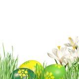 Azafranes y huevos de Pascua blancos Fotografía de archivo libre de regalías