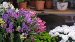 Azalée et fleurs fraîches dans des pots sur l'étagère à vendre dans le fleuriste, vue de plan rapproché banque de vidéos
